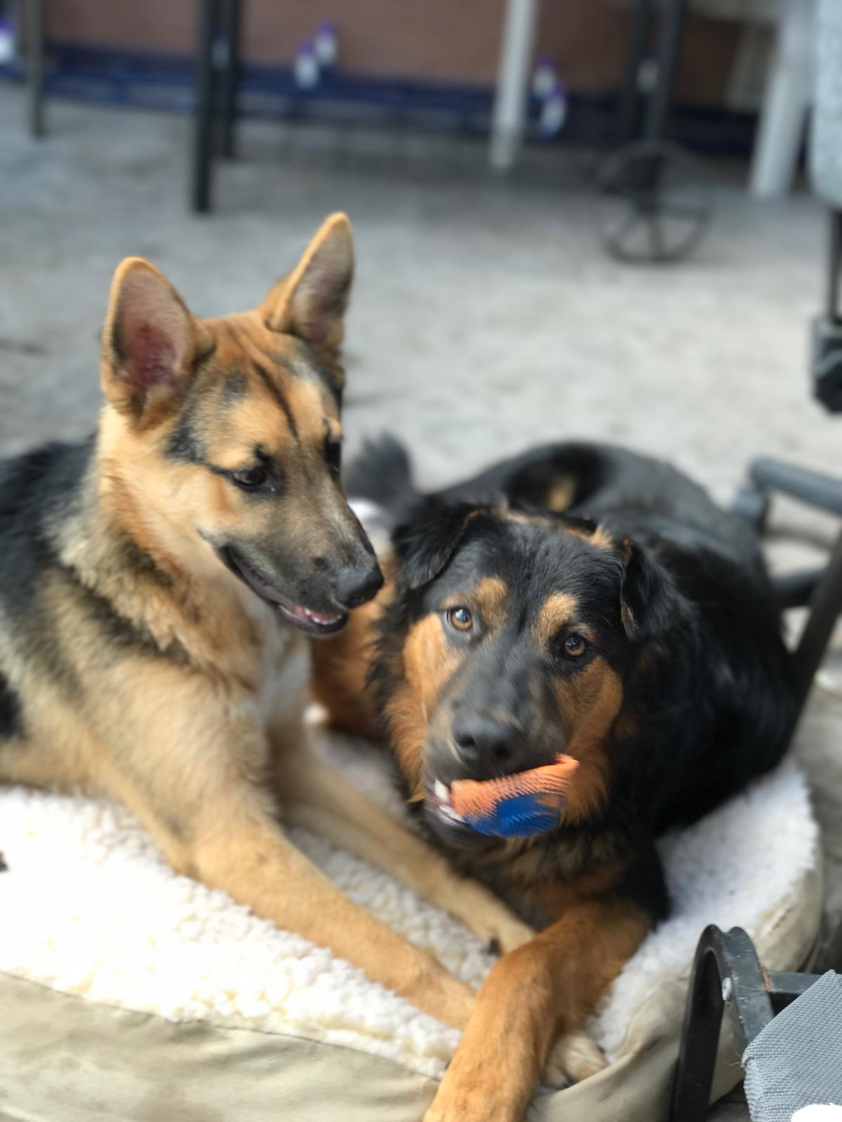 Pet Sitting in Mira Mesa